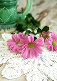 Composition of pink chrysanthemums and knitted nap Royalty Free Stock Image