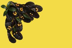 The composition of the plant on a yellow background.  royalty free stock images