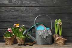 Composition with plants and gardening tools on table. Against wooden background royalty free stock photo
