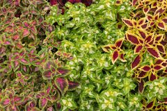 Composition of plants. Composition of green and colorful ornamental plants Stock Image