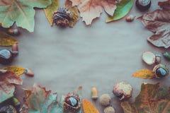 Composition plate en configuration pour des cartes de voeux de jour de thanksgiving de vacances d'automne Les cônes de pin, chêne Image stock