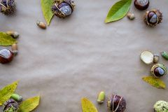 Composition plate en configuration pour des cartes de voeux de jour de thanksgiving de vacances d'automne Les cônes de pin, chêne Photos libres de droits