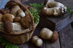 Composition of porcini in the basket on wooden background. White edible wild mushrooms. Copy space for your text.  Royalty Free Stock Photos