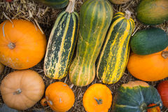 Composition of pumpkin squash and melon on natural background Stock Image