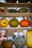 Composition of pumpkin squash and melon on natural background Stock Images