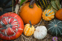 Composition of pumpkin squash and melon on natural background Royalty Free Stock Photo