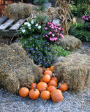 Composition of pumpkins, hay and flowers. Pumpkin composition in NJ Botanical Garden. Autumn time royalty free stock images