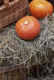 Composition of pumpkins with hay at wood background royalty free stock photography