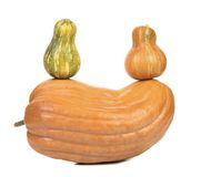 Composition of pumpkins. Stock Photography