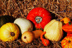 Composition of pumpkins and summer and winter squashes Royalty Free Stock Image