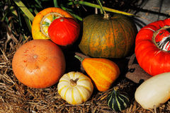 Composition of pumpkins and summer and winter squashes Stock Images