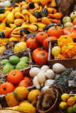 Composition of pumpkins and summer and winter squashes Royalty Free Stock Images