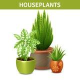 Composition réaliste en plantes d'intérieur Photos stock