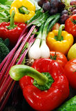 Composition with raw vegetables. Freshly washed vegetables with visible drops of water Royalty Free Stock Photography