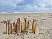 Composition of razor clams on beach. Composition of razor clams washed upon the shore along the North Sea Royalty Free Stock Images