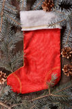 Composition of a red Christmas sock and fir branches Royalty Free Stock Image