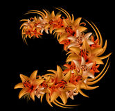 Composition  of red-orange flowers lilies on the black background. Flower arrangement of lilies.. Nature Royalty Free Stock Photography