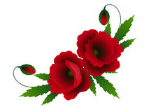 Composition of red poppies on a white background. Composition of red poppies on a white background, illustration Stock Images