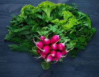 Composition of red radish with parsley, fennel and parsley Royalty Free Stock Photography