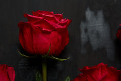 Composition of red roses on dark grey background. Romantic shabby chic decor. Top view. Love Concept. Valentines day Royalty Free Stock Photo