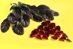The composition of rose petals on a yellow background royalty free stock photos