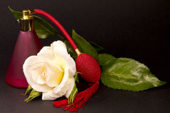 Composition of rose spray and leaf Royalty Free Stock Photos