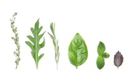Composition with rosemary and other herbs. On white background, top view royalty free stock image
