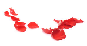 Composition rouge en pétales de rose d'isolement Photos stock