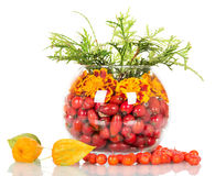 Composition in a round glass vase of flowers and rose hips, mountain ash. Isolated on white Stock Photo