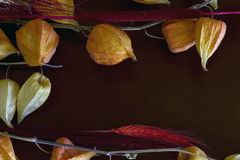 Composition sèche de fleur Photographie stock