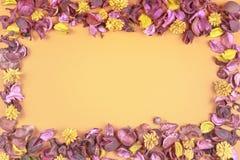 Composition sèche en fleurs sur le fond coloré Vue faite de fleurs et feuilles sèches Vue supérieure, configuration plate Images libres de droits