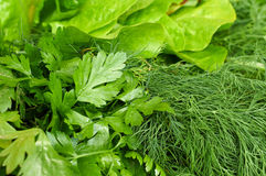 Composition of salad, dill and parsley. Greenery composition of fresh salad, dill and parsley Royalty Free Stock Photo