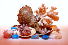 Composition of sea shells. Coral and clear blue stones Stock Photography