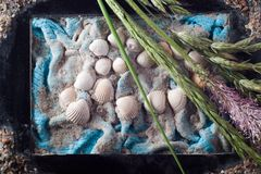 Composition with sea shells and bent Stock Images