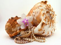 Composition of sea shells, pearls and orchid flower Stock Image