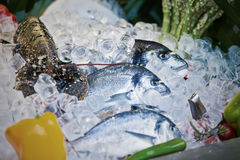 The composition of seafood Stock Photos