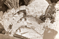 The composition of seafood Royalty Free Stock Images