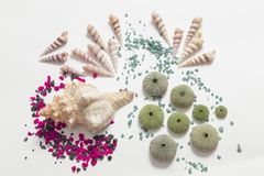 Composition with seashells and colored stones, color impact. Overhead view of a composition on white background with different seashells and some skeletons of stock images