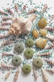 Composition with seashells and colored stones, color impact. Overhead view of a composition on white background with different seashells and some skeletons of stock photo