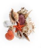 Composition with seashells, seastars, isolated on white backgrou Royalty Free Stock Photo