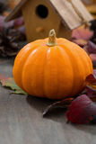 Composition of the seasonal pumpkin and autumn leaves Royalty Free Stock Photography