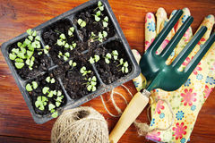 Composition with seedlings and garden tools Stock Photos