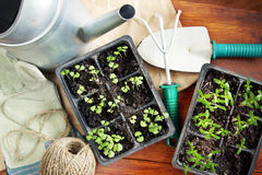 Composition with seedlings for transplantation and garden tools Royalty Free Stock Photo