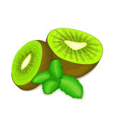 Composition of several kiwi and mint leaves. Ripe vector kiwifruits with fresh pepper mint leaf appetizing looking Royalty Free Stock Images