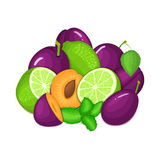 Composition of several plum citrus lime fruit and mint leaves. Ripe vector plums limes fruits with fresh pepper mint Royalty Free Stock Photo