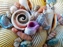 Composition of shell Royalty Free Stock Photos