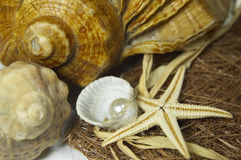 Composition of shells and pear Stock Photos