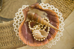Composition of shells and pearl bracelet or necklace Royalty Free Stock Photo