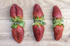 Composition of six strawberries on elm wood. Stock Images