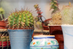 Composition with some catcus and coloured pots Royalty Free Stock Image